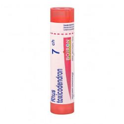 RHUS TOXICODENDRON BOIRON 7CH tube-granules