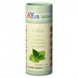 AYUR-VANA COLEUS - 60 Gélules